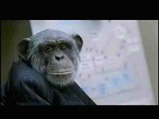 Zum Affen machen…
